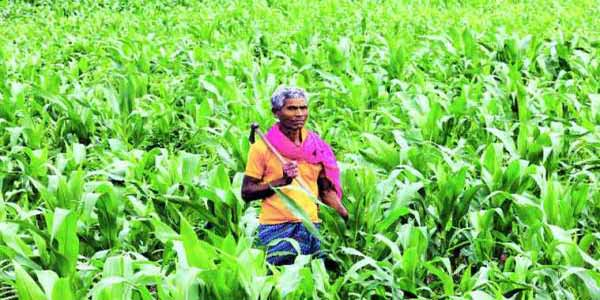 Gujarat Farmers Accidental Insurance Scheme